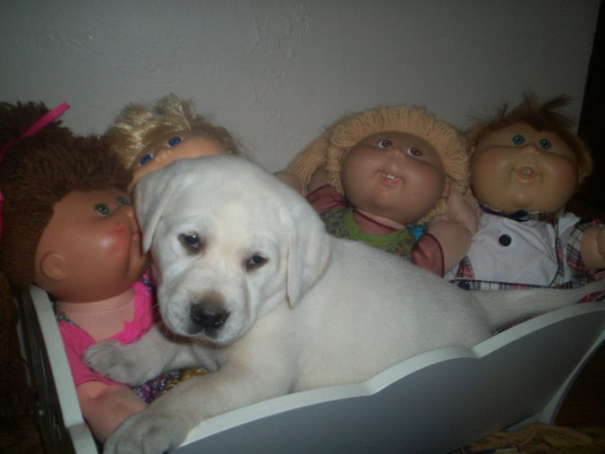 Female White Lab plays dolls !