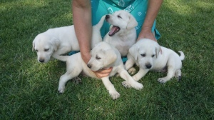 4 sweet boys !