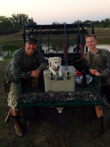 Dove hunting!