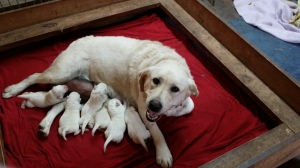 Sophie & her newborns.