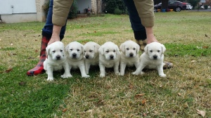 Half a dozen cuties!