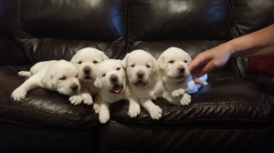 The fabulous five.